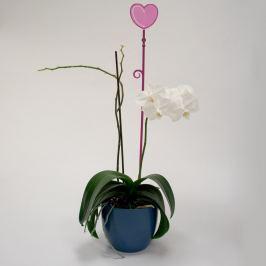 Pręcik do storczyków serce, przeźroczysty fiolet, 2 szt.